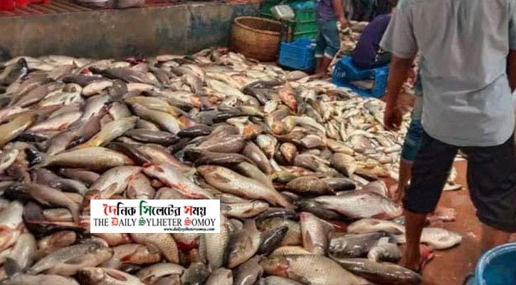 অক্সিজেনের অভাবে মরলো ১৪ কোটি টাকার মাছ