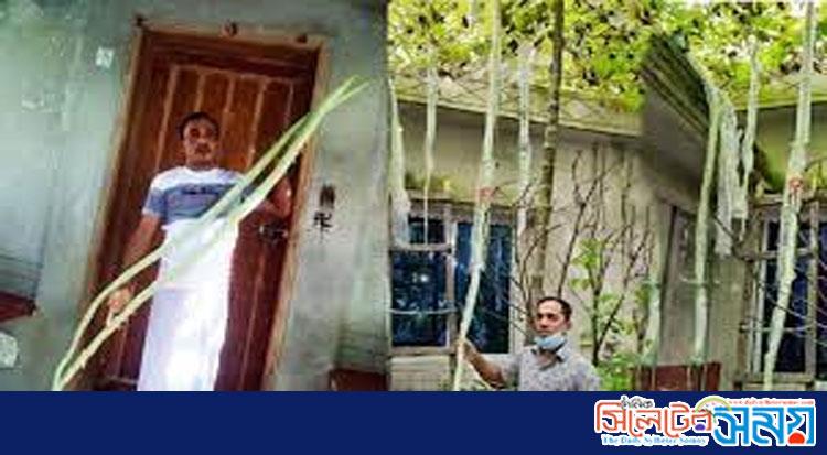 ভোলায় ১০ ফুট লম্বা চিচিঙ্গা দেখতে মানুষের ভিড়